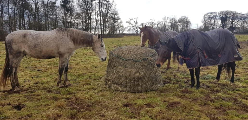 TIPPING THE SCALES: GETTING TO THE BOTTOM OF OBESITY IN OUR NATIVE HORSE'S AND PONIES. PART FOUR.