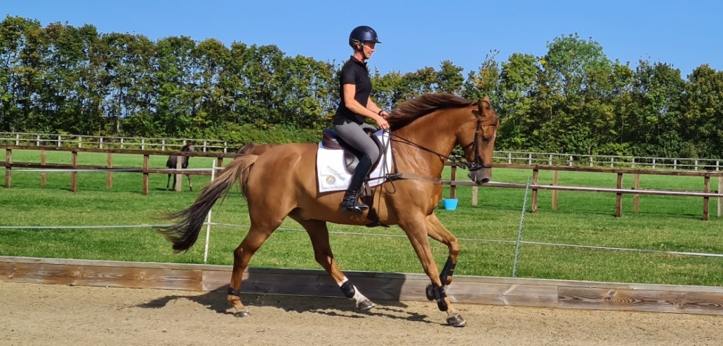 CONSIDERING YOUR HORSES WORKLOAD
