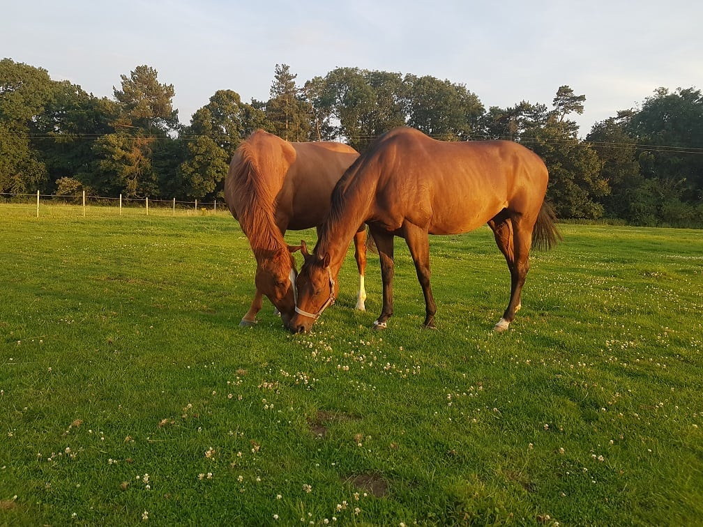 TIPPING THE SCALES: GETTING TO THE BOTTOM OF OBESITY IN OUR NATIVE HORSE'S AND PONIES. PART ONE.