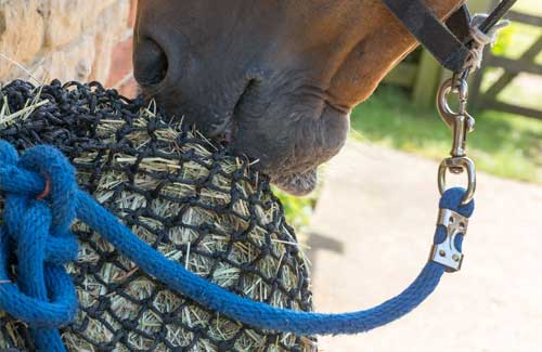 Tipping the scales: Getting to the bottom of obesity in our native horse's and ponies. Part Three.